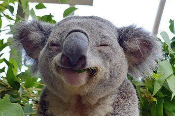 koalafied-to-not-give-a-fk-2-9266-1430375809-6_big