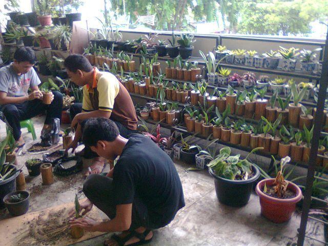 mahasiswa menanam tanaman