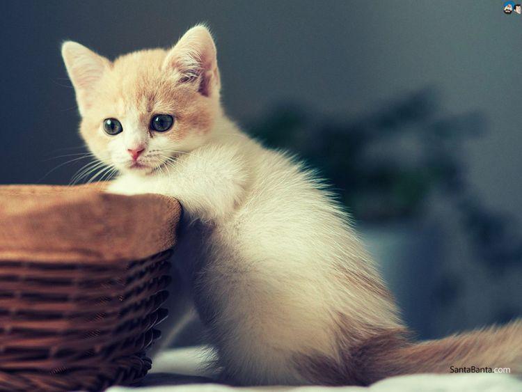 awas! kucingmu bisa nyolong kalau lagi laper!