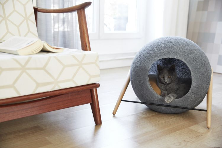 Catty in the wool ball. :3