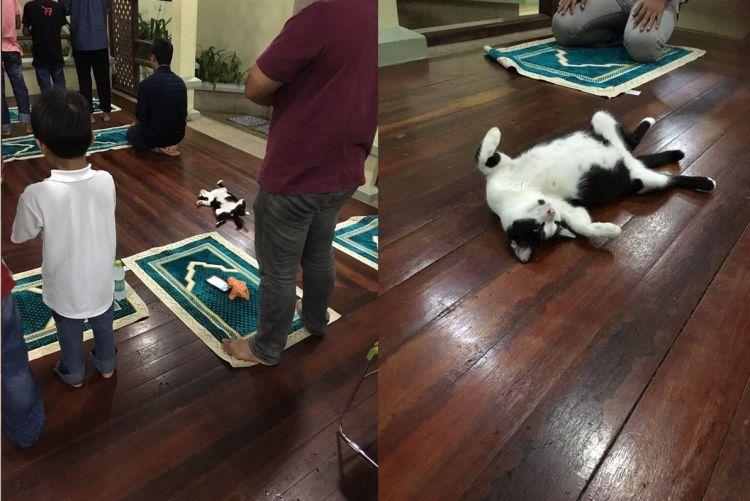 Kucing masjid (credit: @urbandogge)