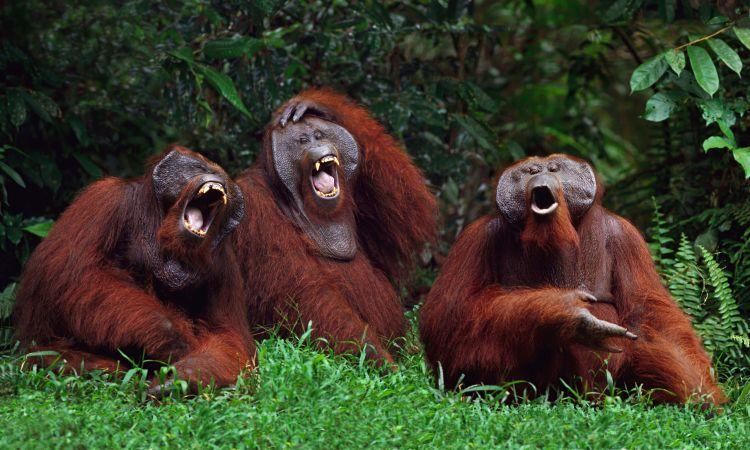 Ketika semua temanmu menertawaimu. Itu yang kamu lihat.