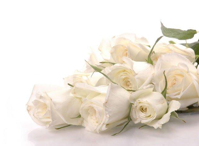 Arti dan Makna Bunga Mawar Putih