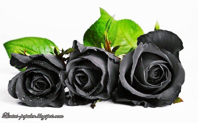 Bunga Yang Melambangkan Kematian dan Berduka CInta