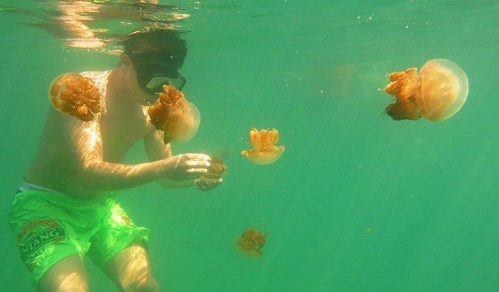 Kesempatan untuk bisa menyentuh ubur-ubur. Ayo, snorkeling di Derawan.
