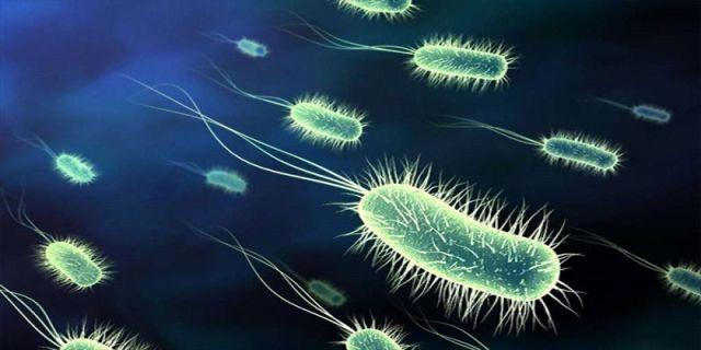 Menghentikan pertumbuhan bakteri ditubuh