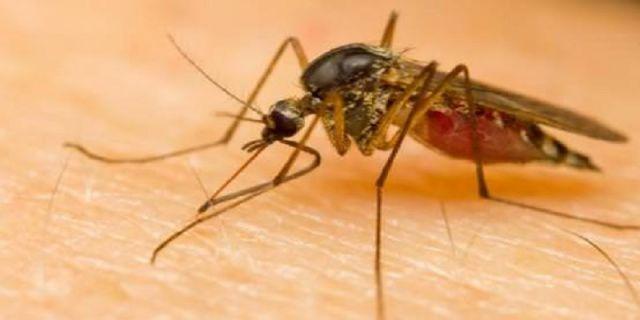 Penyakit malaria pun bisa di cegah