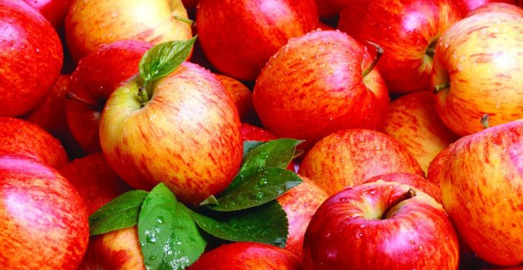 apel untuk mukamu.