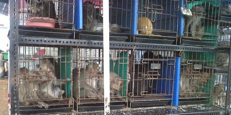 Banyak satwa yang dilindungi justru dijual bebas di Pasar hewan Jatinegara.