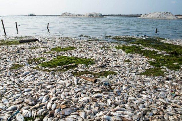 Lautan jasad ikan :(
