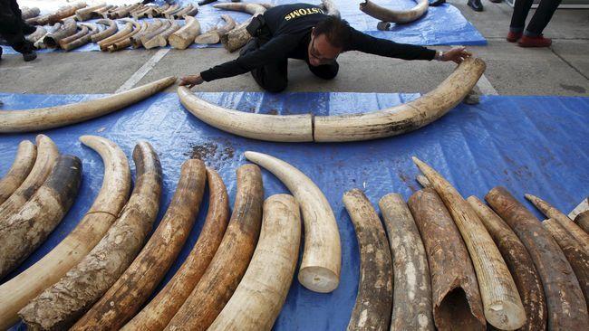 Untuk ini, banyak nyawa gajah yang menjadi korban.