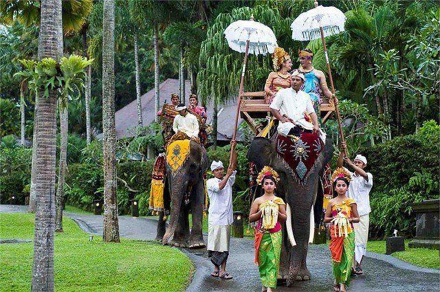 gajah-gajah ini akan jadi saksi pernikahanmu