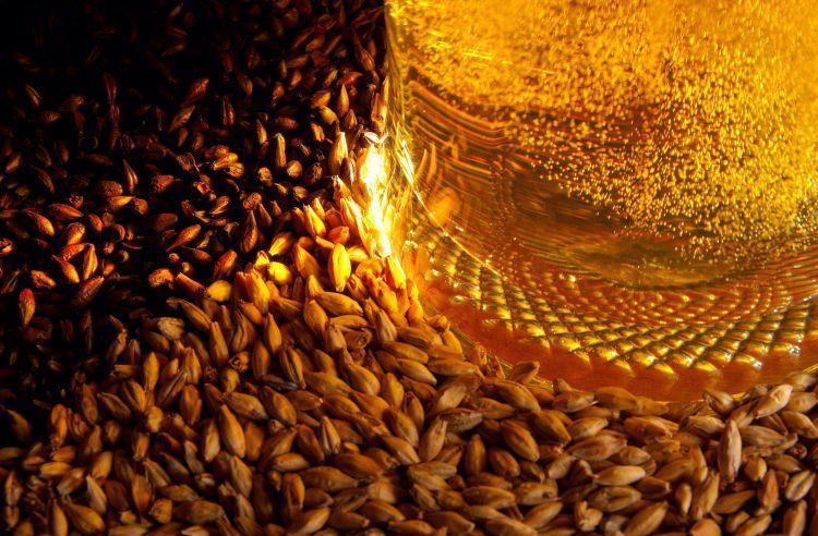 gandum dalam bir mengandung vitamin B