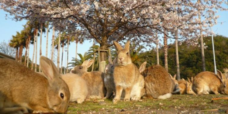 Bugs bunny-nya banyak