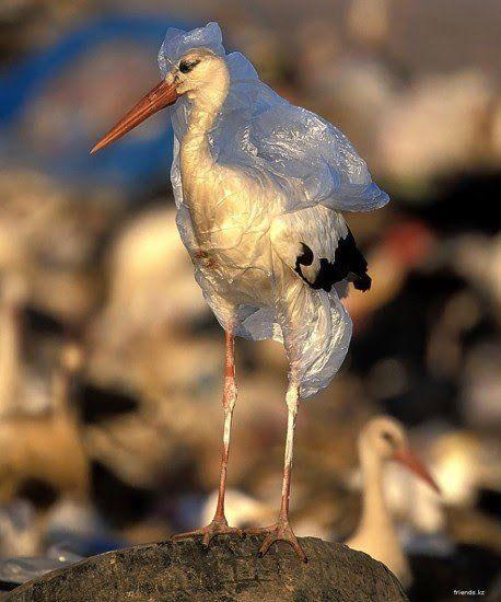 Sekitar 500 miliar karung plastik dipakai di seluruh dunia setiap tahun. Tiap jam dan menitnya ada berapa??