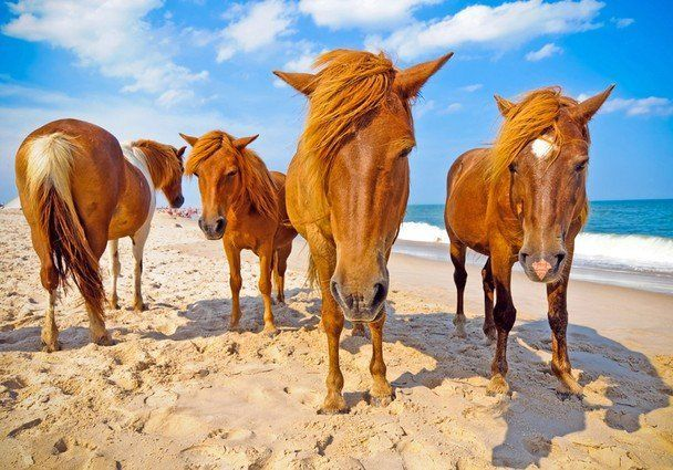 Banyak kudanya