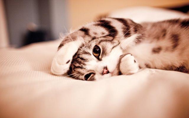 Pura-pura tidur
