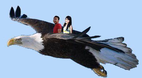 Terbang dulu~