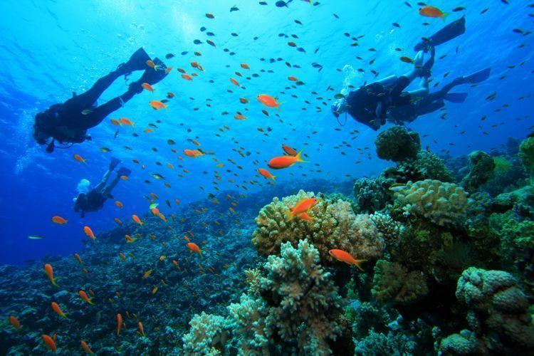Keindahan bawah laut Komodo memang sempurna