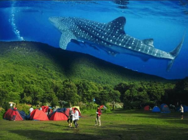 Waduh, di gunung ada hiu