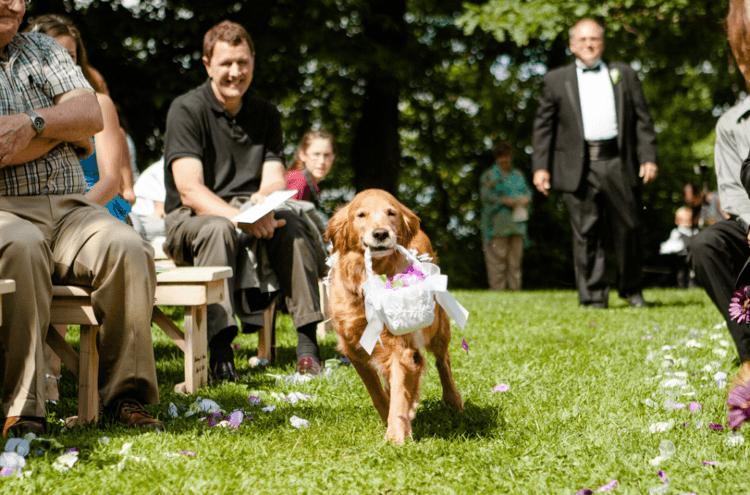 anjing pembawa bunga!