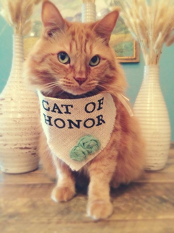 cats of honor