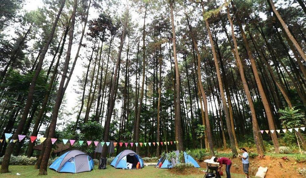 Wisata Alam Gunung Pancar, Hutan Pinus yang Asyik dan Bisa Dikunjungi Bersama Keluarga, Teman ...