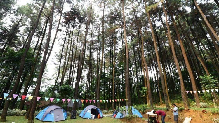 wisata alam gunung pancar hutan pinus yang asyik dan bisa dikunjungi bersama keluarga teman atau pacar