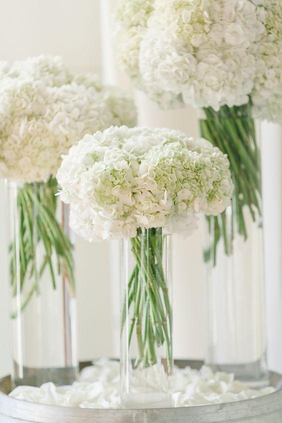 Hydrangea putih