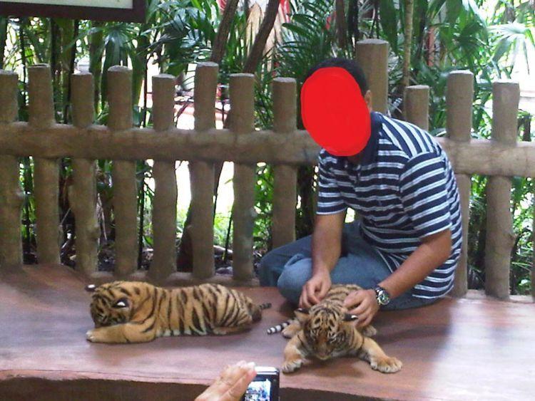 Sampai memisahkan bayi macan dengan induknya...