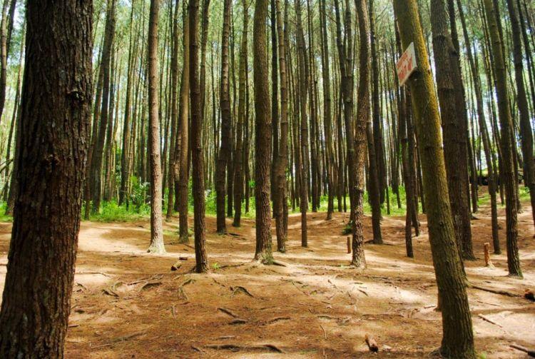 Dalamnya hutan juga layak dijelajahi
