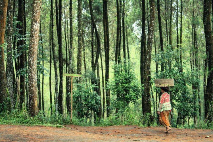 hutan kebanggaan warga Magelang via @asyasholiha