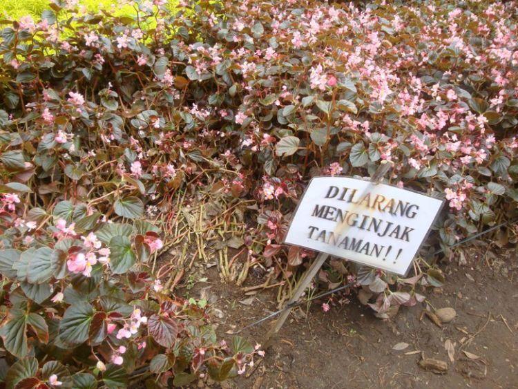 """""""Dilarang menginjak tanaman"""""""