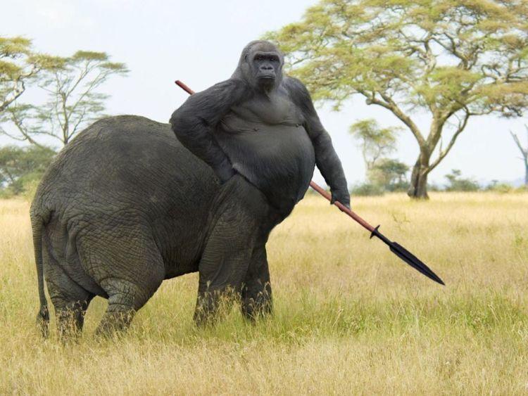Gorijah! Gorila - Gajah