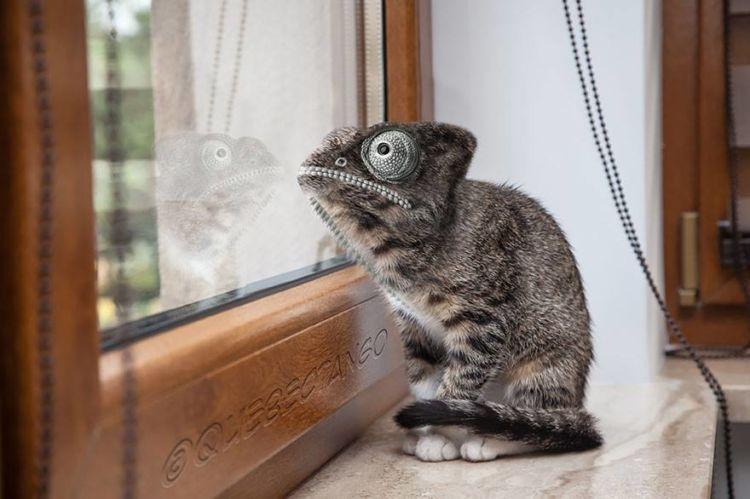Kucing-bunglon = Kunglon!