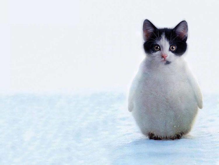 Kucinguin~~
