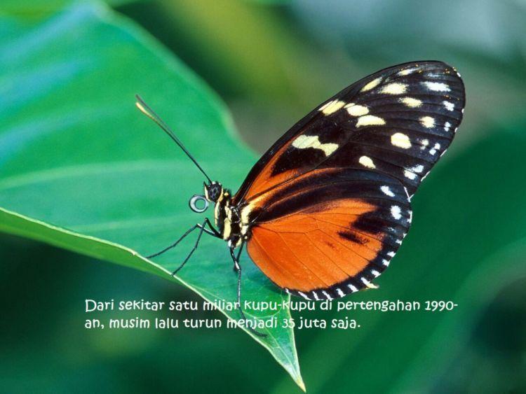 Lebih dari itu, kondisi bumi yang makin panas pun bisa buat kupu-kupu punah 2050 nanti