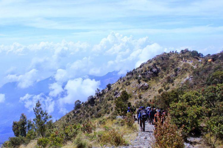 jalur pendakian Gunung Lawu