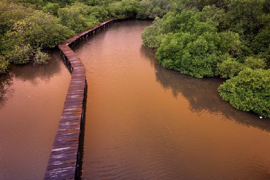 mangrove kala senja
