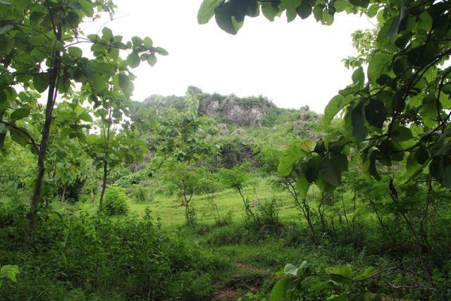 Banyak Pohon Jati yaa