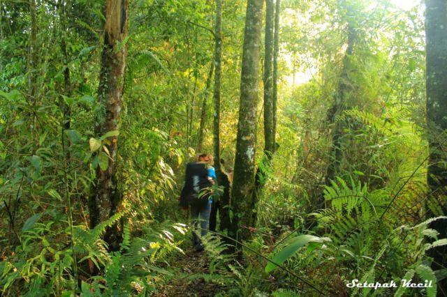 Hutan Jalur Selabintana