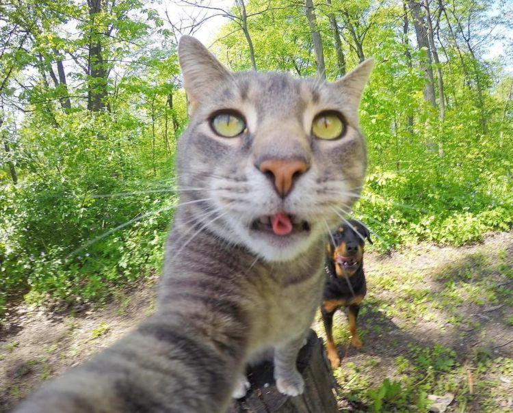 Kucing Ini Bisa Selfie Sendiri Bahkan Dia Punya 18 Foto
