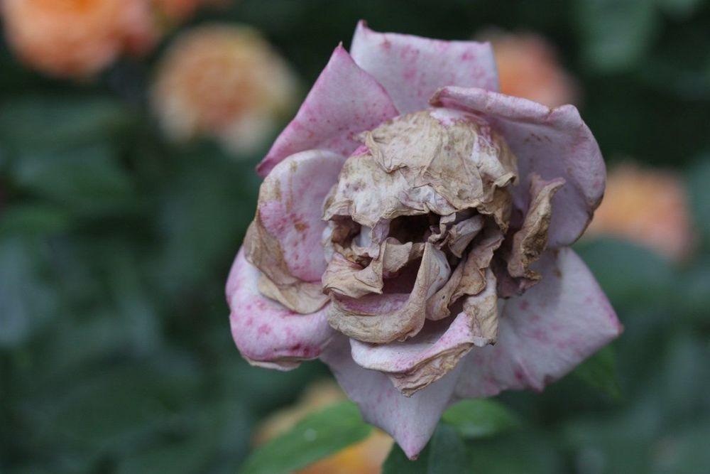 Kalau bunganya begini, takut boleh sih ya.