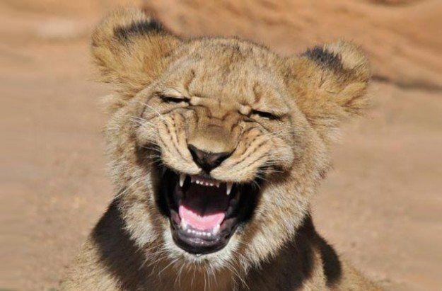 Laugh a Lot!