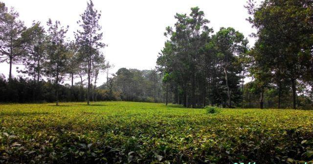 Agrowisata Tanjungsari