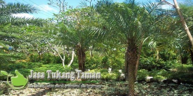 Taman pohon palem