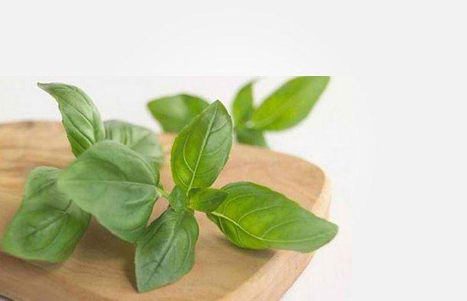 Rajin mengkonsumsi daun kemangi