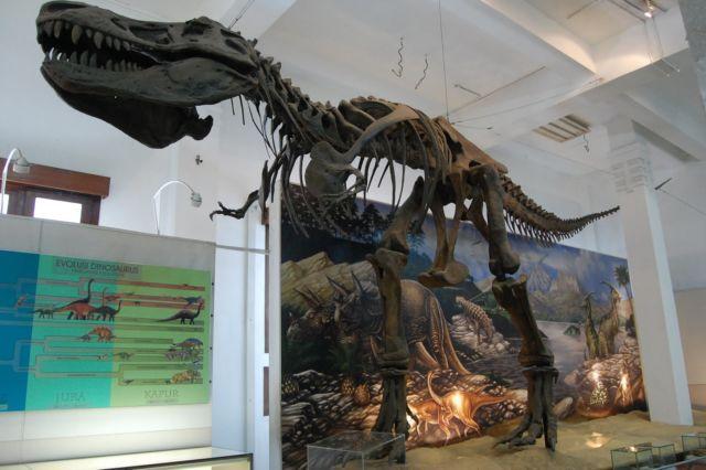 Fosil dinosaurus di Museum Geologi