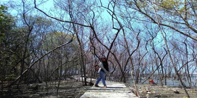 Percis kaya Hutan Mangrove di Muara Angke