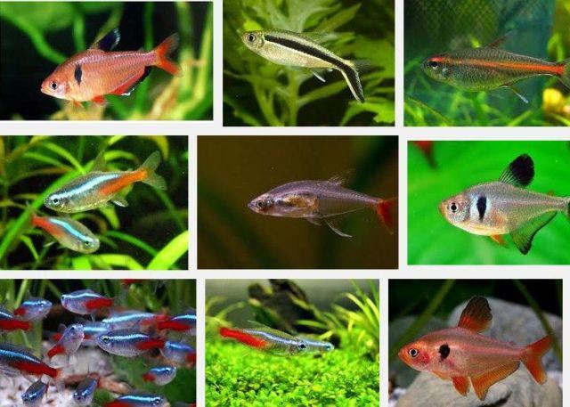 Ikan Hias Kecil dan Cantik tahan Lama